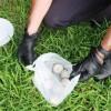 Avellino – Esche contaminate e strage di cani, avviate le indagini