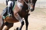 *L'equitazione Irpina protagonista ai Campionati Italiani*