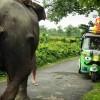 """In India con l'Ape – car, la missione di """"Bianco, Rossi e Verdoni"""""""