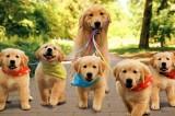 Gadit Avellino soccorre un cane avvelenato