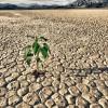Allarme siccità in Campania: richiesto lo stato di calamità