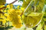 ONAV Avellino – Corso di I° livello per assaggiatori di vino
