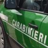 Lacedonia – Attività dei carabinieri forestali per la tutela dell'ambiente e della salute pubblica