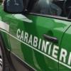 Serino – Furto di legna: due persone denunciate dai Carabinieri Forestali