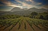 Consorzio tutela Vini d'Irpinia, approvazione modifiche disciplinari