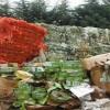 Montella – I Carabinieri Forestali denunciano due persone
