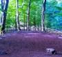 Lioni – Giochi di luce e trees mapping: spettacolo in montagna