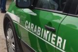 I carabinieri forestali sequestrano lacci in acciaio per la cattura di cinghiali