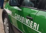 Serino (Av) – coltivazione abusiva di canapa sativa: denunciato un 45enne