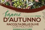 """Info Irpinia – Nuovo appuntamento per """"Sapori d'autunno"""""""