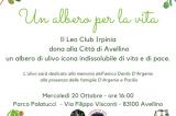 Avellino – Donato ulivo alla comunità
