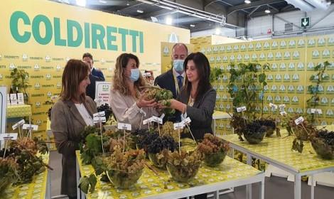Vinitaly: Coldiretti, le uve storiche campane tra i grappoli d'Italia